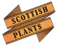 Scottish Plants