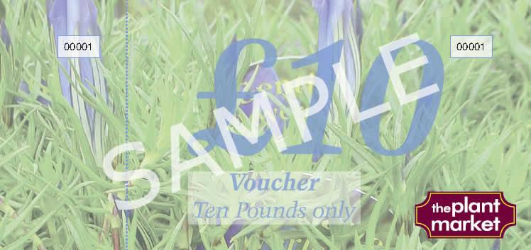 voucher-sample-10