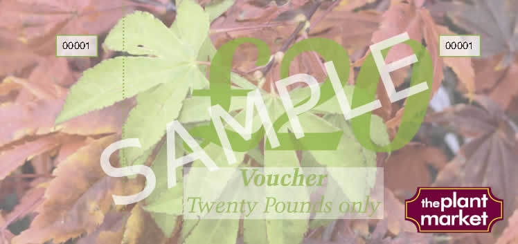 voucher-sample-20