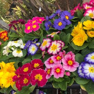 Seasonal plant selection
